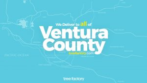 Tree Factory Delivers Weed To Every City In Ventura County